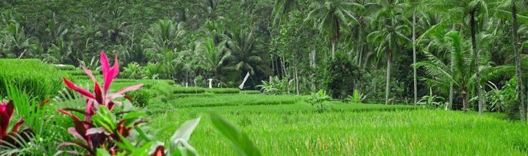 rice-field-view1